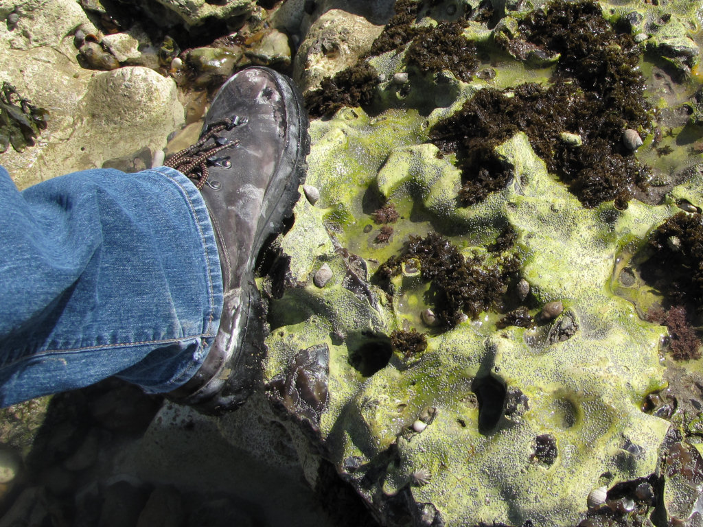 Seven Sisters walking boots