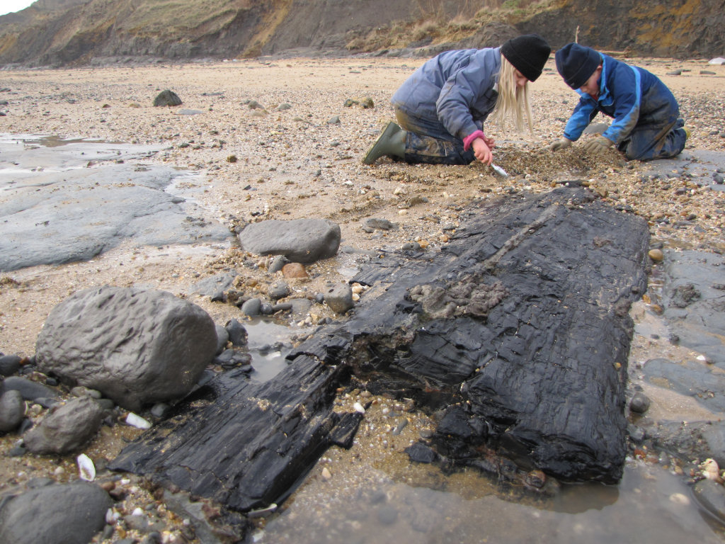 Walton-on-the-Naze fossil wood